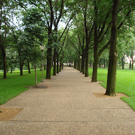 Walkway to the Arch by Kimberly Oegerle - City,  Street & Park  City Parks ( canopy, grass, trees, walkway,  )