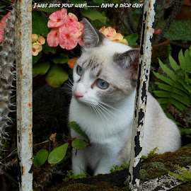 Tala by May Cadiente - Animals - Cats Kittens