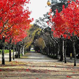 Avenida vermelha by Ana Batista Constantino - City,  Street & Park  City Parks ( cidade, outono, natureza, parques,  )