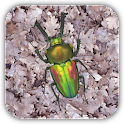 Stag beetle Live Wallpaper icon