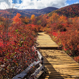Graveyard Fields, NC by Naresh Balaguru - Landscapes Prairies, Meadows & Fields ( mountains, colors, fall foliage, landscapes, fields )