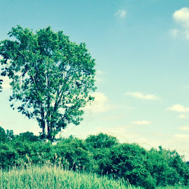 Lone trees by Adam Konopetski - Landscapes Prairies, Meadows & Fields ( sky, nature, foliage, trees )