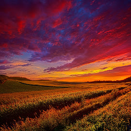 More Than A Feeling by Phil Koch - Landscapes Prairies, Meadows & Fields ( vertical, wisconsin, ray, phil koch, landscape, spring, sun, photooftheday, love, wicounties, sky, nature, tree, bestoftheday, horizons, flower, follow, instagood, clouds, park, twilight, horizon, scenic, shadows, wild flowers, field, picoftheday, fog, sunset, meadow, landscapephotography, trees, beam, sunrise, landscapes, floral, mist )