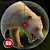 Wild Bear Sniper Shooter 3D file APK Free for PC, smart TV Download