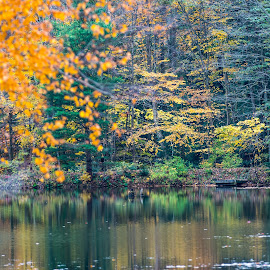 solitude by Michael Wolfe - Nature Up Close Other Natural Objects ( water reflection, fall colors, bushes, autumn, trees, fallen leaves, pond, fall, color, colorful, nature,  )