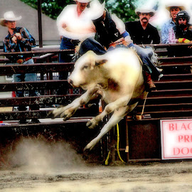 by Christi Wehner - Sports & Fitness Rodeo/Bull Riding