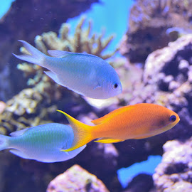 Color by Renu Jayasinghe - Animals Fish