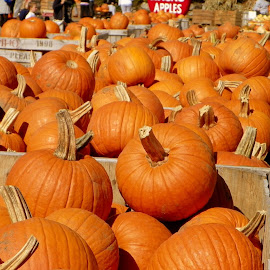 Pumpkins Galore by Lee Grubbs Burke - Food & Drink Fruits & Vegetables ( orange, pumpkin, fall, pumpkins, macks )