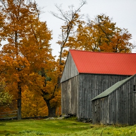 Red Roof by Nancy Merolle - Buildings & Architecture Other Exteriors ( red roof, barn, autumn, colors, red leaves, fall, old wood, weathered barn )