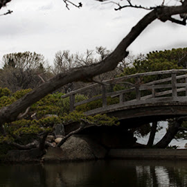 Love on a bridge by Christina Messenger - Wedding Bride & Groom ( nikka yuko gardens, lethbridge wedding photographer, bridge, bride and groom, wedding photographer )