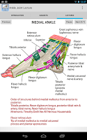 Screenshot of Anatomy of the Ankle Joint