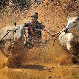 race again by Dadan Ramdani - Sports & Fitness Rodeo/Bull Riding ( bull race )