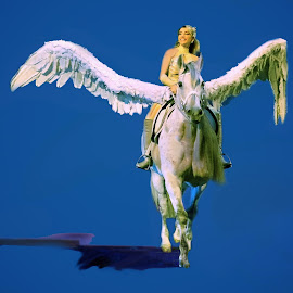 Pegasus At The Circus by Stephen Beatty - News & Events Entertainment