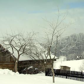 Decor de Iarna by Kati Raileanu - Landscapes Mountains & Hills