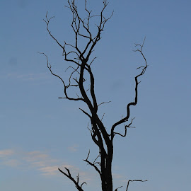 Lonely Tree by Tina Marie - Nature Up Close Trees & Bushes ( clouds, sky, tree, dead tree, lonely tree )