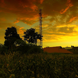 My Garden by Muhammad Noli Hendra - Landscapes Sunsets & Sunrises