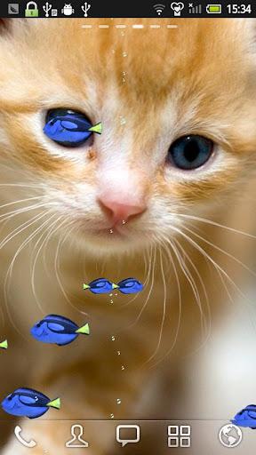 ナンヨウハギと子猫★LIVE壁紙