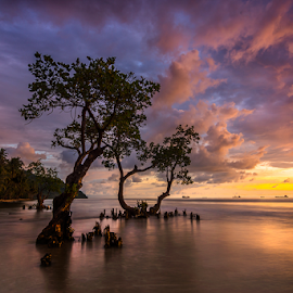 Mangoves at Dusk by Ade Noverzan - Landscapes Waterscapes ( sunset, trees, beach, dusk )