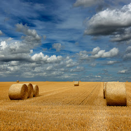 Alpacas redondas 16 by Eduardo Menendez Mejia - Landscapes Prairies, Meadows & Fields ( redondas, tokina 12-24, cambridgeshire, alpacas, menendez, eduardo, nikon, cambridge, d5100 )
