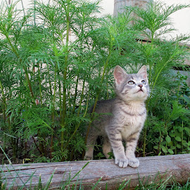 Heaven Sent by Darla Judes - Novices Only Pets ( cat, kitten, plants, flowers, garden )