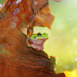 Hay ^^ by Andri Priyadi - Animals Amphibians