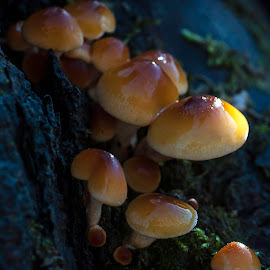by Larry Rogers - Nature Up Close Mushrooms & Fungi