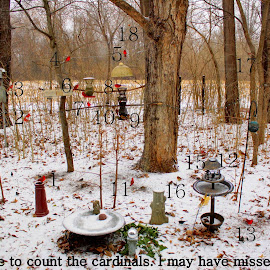 Count the cardinals by Tim Damian - Typography Captioned Photos