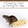 The Complete Guide For Rats
