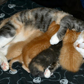 Patches aka Mama n her babies by Shane Hoopes - Animals - Cats Kittens