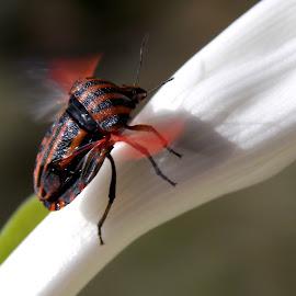 by Olja Simović Ex Jemuović - Animals Insects & Spiders