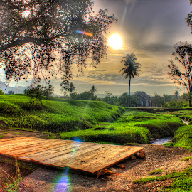Wooden Bridge by Vicky Mahendra - Landscapes Prairies, Meadows & Fields ( hdr, green, bridge, landscape, photography, , Earth, Light, Landscapes, Views )