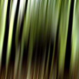 Lines by Andrei-Daniel Botezatu - Abstract Macro ( abstract, model, green, line, black )