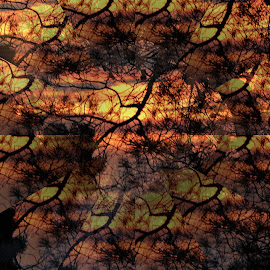 dance branches by Tihomir Lugaric - Abstract Patterns