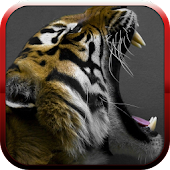 Big cats sounds APK for Ubuntu
