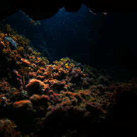 Golden Cave by Theodoros Theodorou - Landscapes Underwater ( underwater, underwater cave, free diving photography, cyprus )