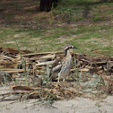 Stone Curlews (a pair)