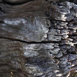 patterns of wood  by Magdalena Wysoczanska - Abstract Patterns ( up close, nature, pattern, wood, texture, detailed, monotone )
