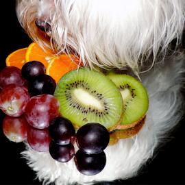 fruits with dog by LADOCKi Elvira - Food & Drink Fruits & Vegetables ( fruits, dog )