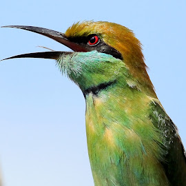 Green Bee-eater by S Balaji - Animals Birds ( wild, s.balaji, animals, style, nature, green bee-eaters, birds,  )