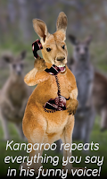 Screenshot of Kangaroo Phone Call