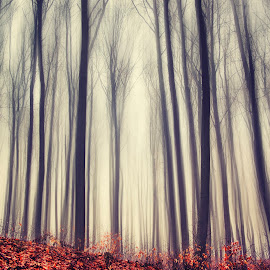 Utopia by Mihail Dulu - Landscapes Forests ( winter, february, fog, trees, forest,  )