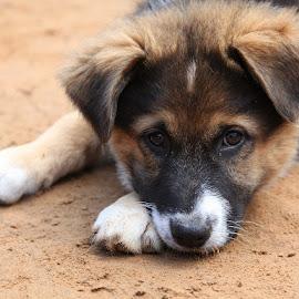 Animal Shelter Ulubele. Latvia. by Zanna Zaka - Animals - Dogs Puppies ( dog portrait, puppy, dog playing, latvia, dog )