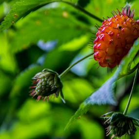 by Don Saddler - Food & Drink Fruits & Vegetables (  )