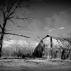 Winter's Bone by Sue Neitzel - Black & White Buildings & Architecture ( black and white, farms, barns, landscapes, rustic,  )