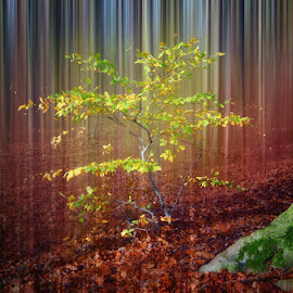 little tree by Huybrighs Marc - Digital Art Places ( forrest, tree, green, yellow, leaves )