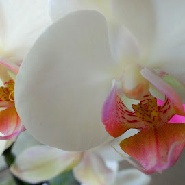 Orchids  by Roslyn Meadows - Nature Up Close Gardens & Produce