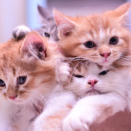 by Raje Azlan - Animals - Cats Kittens