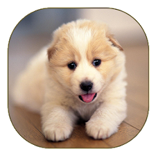 Cute Dog Live Wallpaper