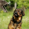 Cat + Dog = Love
