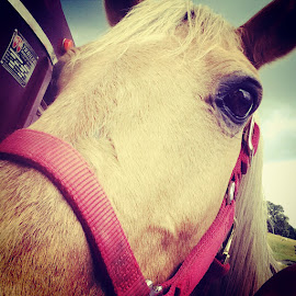 by Charlotte Schaub - Animals Horses